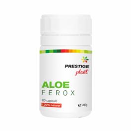 Aloe ferox 60cps Prestige Plant