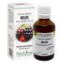 Extract din mlădiţe de MUR 50ml Plant Extrakt